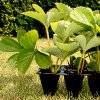 Как вырастить рассаду клубники: выращивание усами и делением куста
