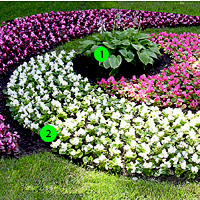 как красиво посадить петунию