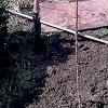 Посадка колоновидных яблонь: как сажать и формировать крону дерева.