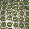 Выращивание рассады огурцов: как правильно вырастить в домашних условиях.