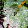 Болезни огурцов в теплице и грунте: почему желтеют и сохнут листья, завязи и т.д.