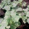 Как сажать огурцы правильно: как посадить рассаду в теплицу и открытый грунт.