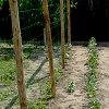 Выращивание огурцов на шпалере: какая сетка для огурцов удобнее.
