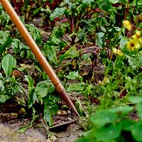 Подкормка вишни после сбора урожая