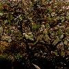 Подготовка вишни к зиме: уход, обрезка, подкормка, посадка вишни осенью.