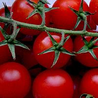 выращивание помидоры на подоконнике