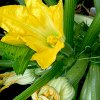 Выращивание кабачков: в открытом грунте, в теплице, в мешках, на компостной куче и т.д.