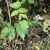 Уход за малиной осенью: осенняя обрезка, обработка почвы и подкормка малины.