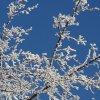 Как подготовить малину к зиме: комплексная подготовка, укрытие, обрезка и пр.