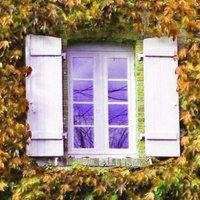 Как избавиться от дикого винограда на даче