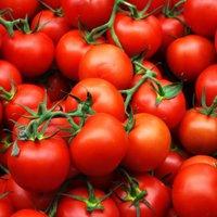 помидор рапунцель на балконе купить семена