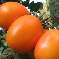 фото помидоры де барао