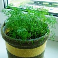 Цветы дома - как начать разводить комнатные растения 99