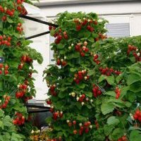 как посадить клубнику весной в вертикальные грядки
