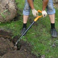 как сажать сливу весной пошаговая инструкция