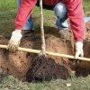 Посадка сливы весной: как посадить сливу саженцами в открытый грунт, пошаговая инструкция.