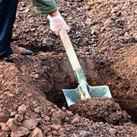 как сажать вишню весной пошаговая инструкция - фото 2