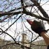 Обрезка вишни весной: схема и правила, как обрезать разные виды вишни.