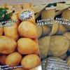 Выращивание картофеля из семян: посадка картофеля семенами на рассаду и уход.