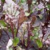 Болезни свеклы: описание и лечение заболеваний листьев и клубней.