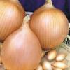 Лук севок Центурион: описание сорта и особенности его выращивания.