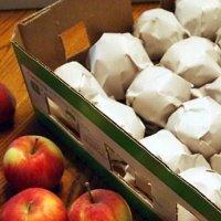 Условия хранения яблок в домашних условиях 128