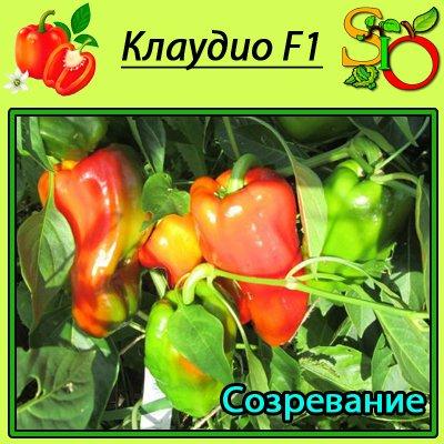 болгарский перец клаудио характеристика и описание